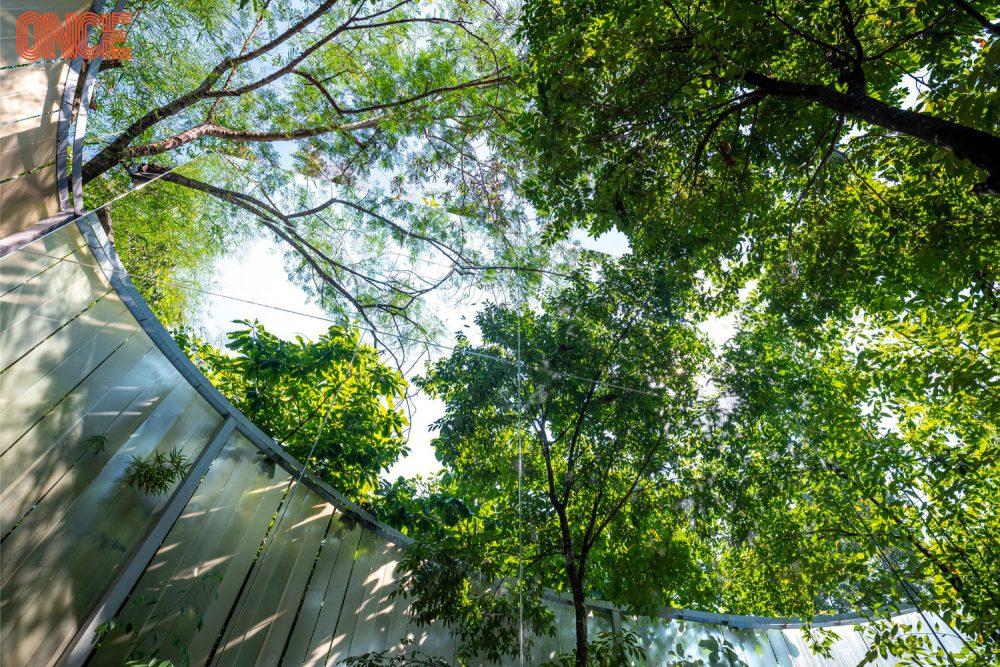 ต้นไม้ของร้าน Pause CNX